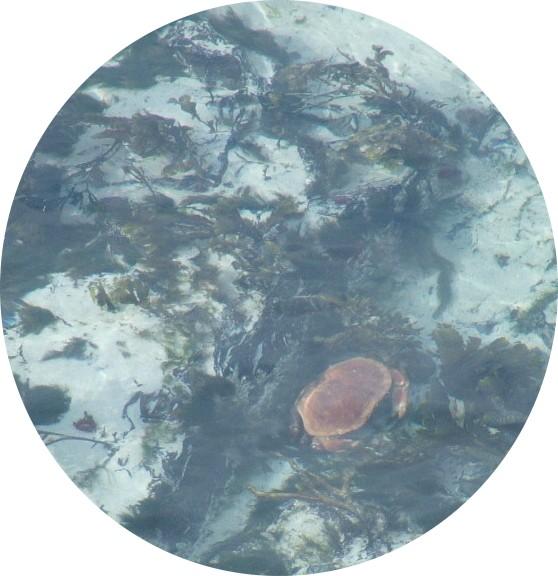 DSCF1714-circular.jpg