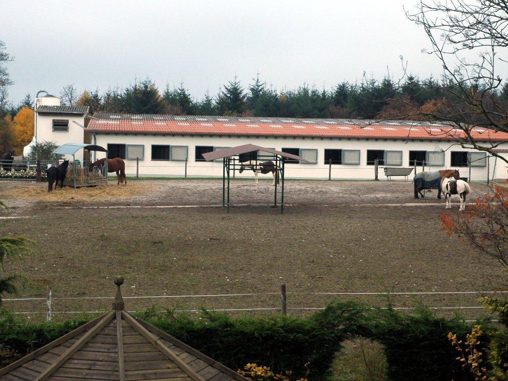 081106_horses.jpg