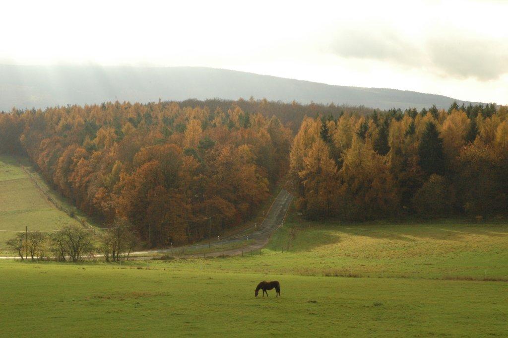 061119_woods.jpg
