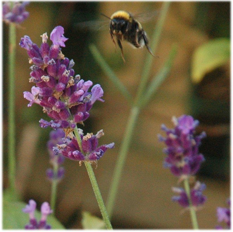 060718_garden-03.jpg