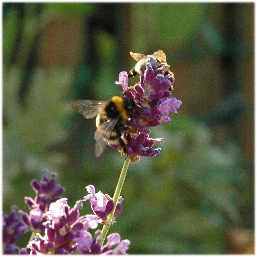 060718_garden-04.jpg