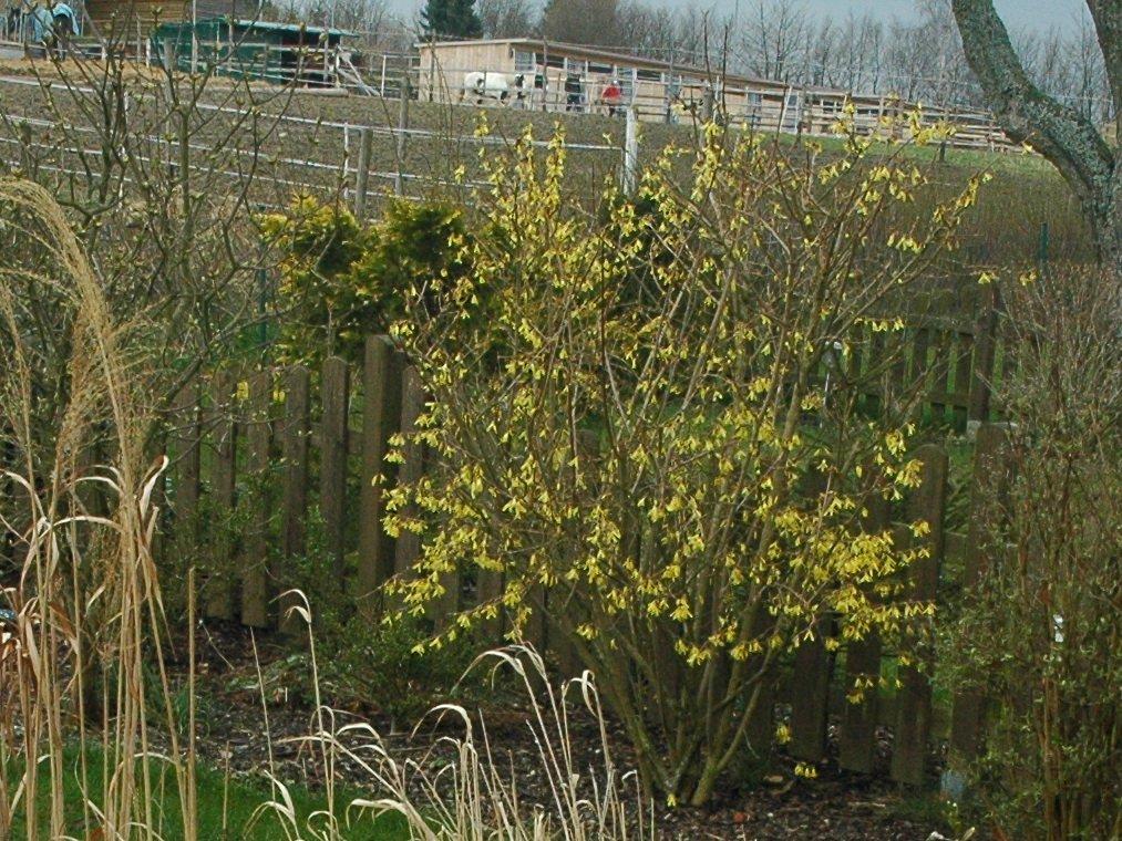 080406_garden01.jpg