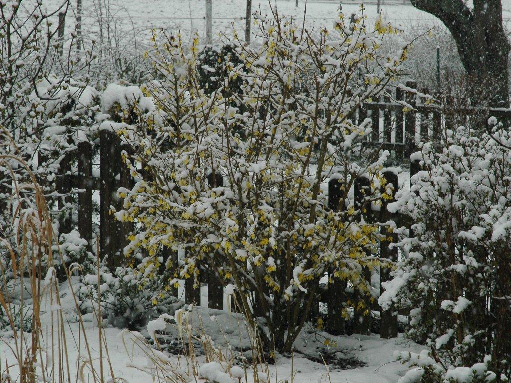 080406_garden02.jpg